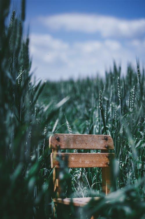 Коричневый деревянный стул посреди зеленого поля