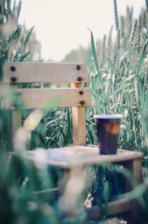 Photos gratuites de boire, boisson, chaise, herbe