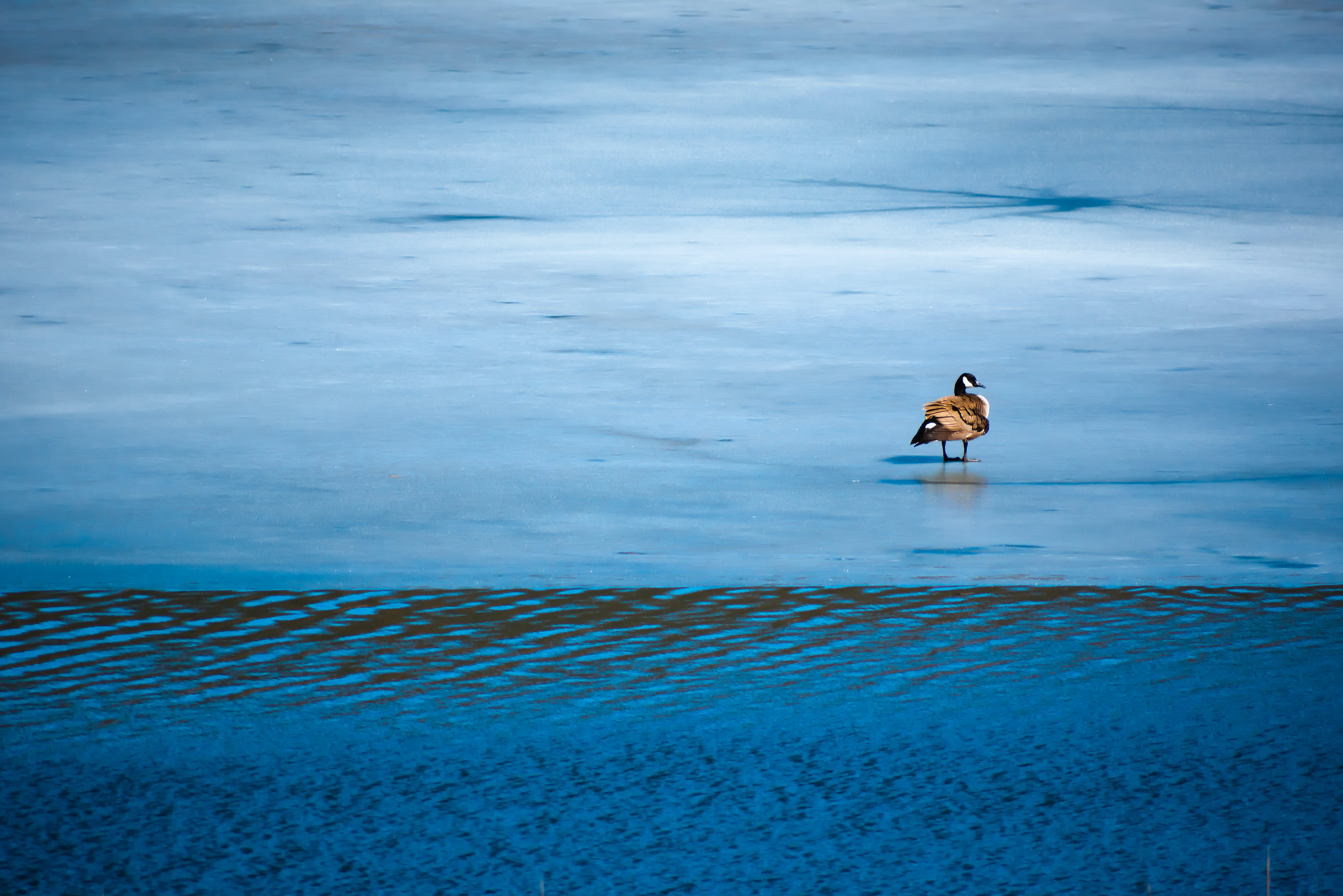 Brown and White Bird on Body of Water