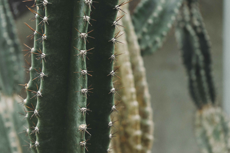 Kostenloses Stock Foto zu kakteen, nahansicht, pflanze, scharf