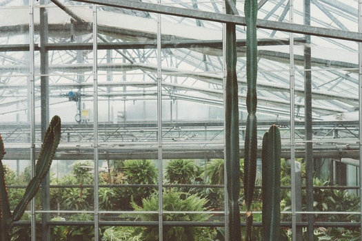 Free stock photo of garden, glass, roof, plants