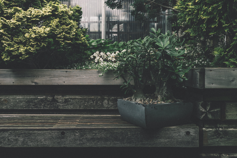 Black Plant Box on Bench