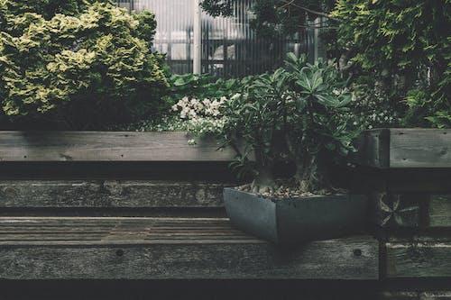 长凳上的黑色植物盒