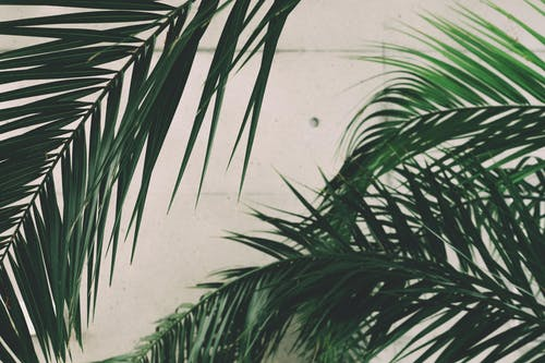 1000 Engaging Palm Leaves Photos Pexels Free Stock Photos We hope you enjoy our growing. engaging palm leaves photos pexels