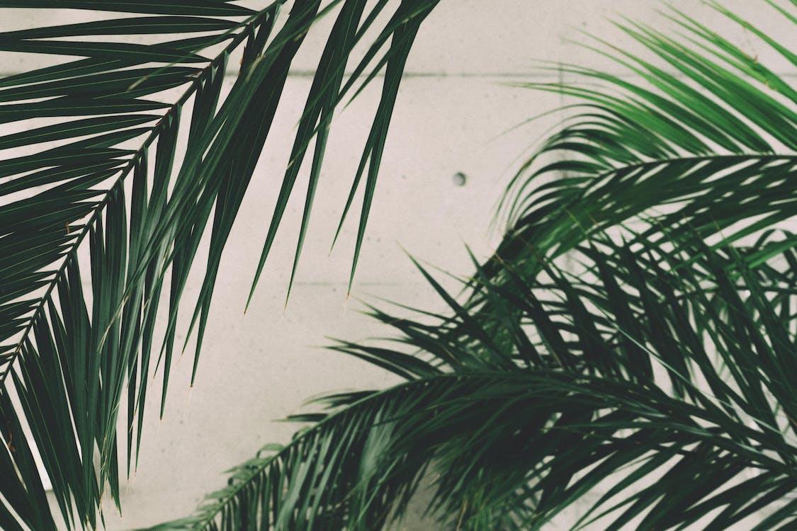 beton, grün, nahansicht