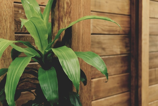 Green Leafed Plant by the Brown Wooden Fence