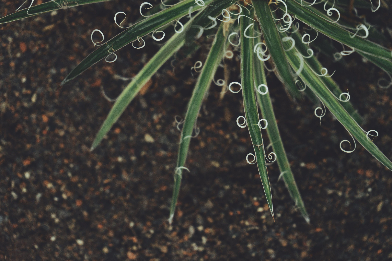 alan derinliği, bitki, çekilmiş
