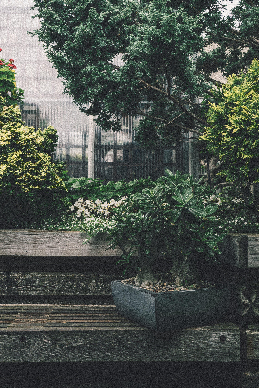 architektur, bank, bäume