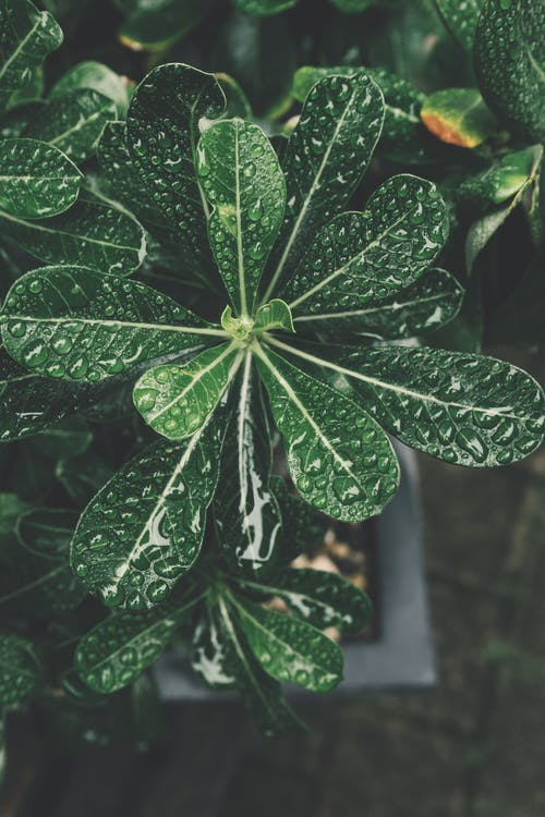 Green Leaf Plant on Focus Photo