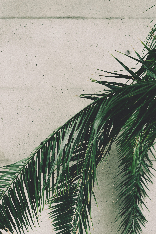 Foto stok gratis berbayang, beton, daun palem, di luar ruangan