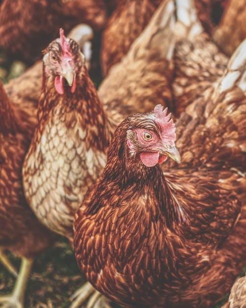Photos gratuites de agriculture, animal de compagnie, animal domestique, animaux