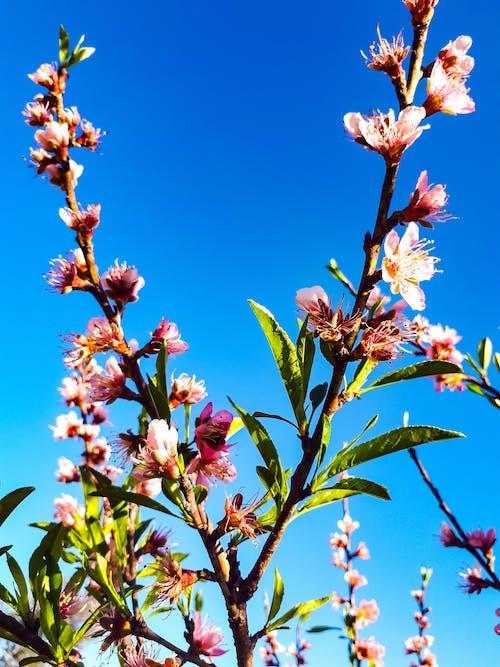 Ingyenes stockfotó élénk színű, fa, gyönyörű virág, gyönyörű virágok témában