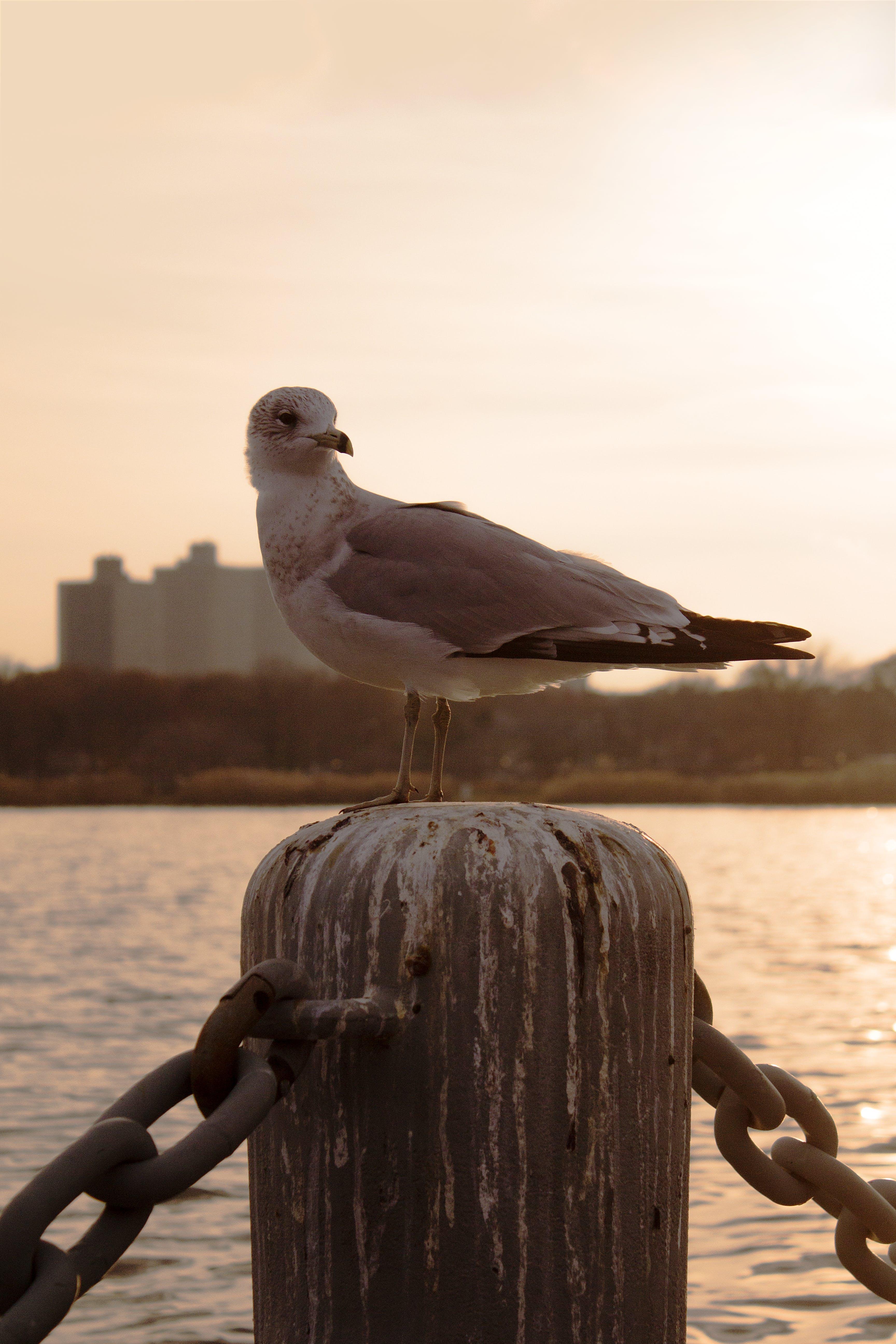 de água, alvorecer, ao ar livre, ave