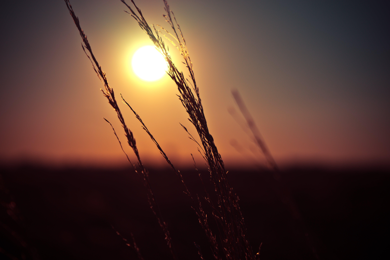 Foto d'estoc gratuïta de afilat, blat de moro, bokeh, càlid