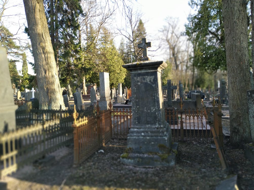 Free stock photo of cemetery, death, life