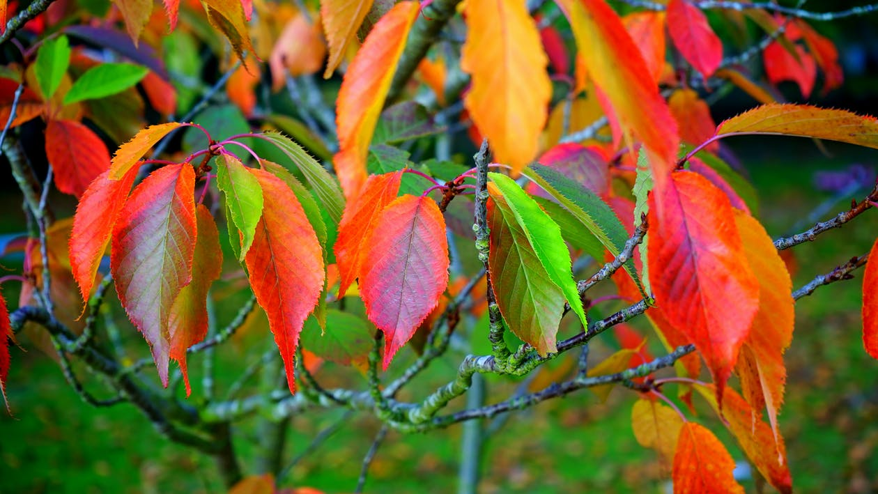 Red Green and Orange Leaves