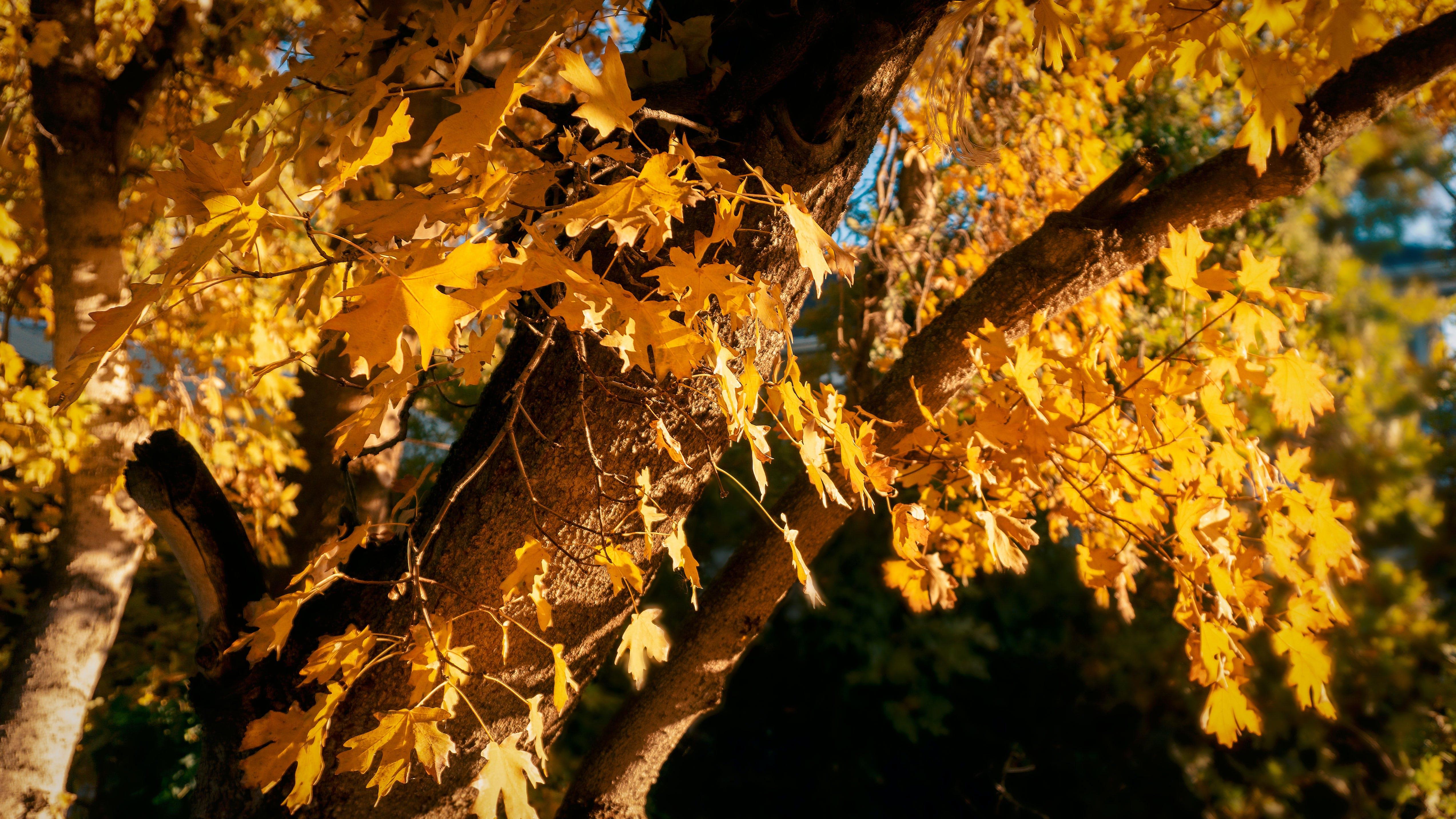 Foto d'estoc gratuïta de arbres, colors de tardor, fulles, tardor