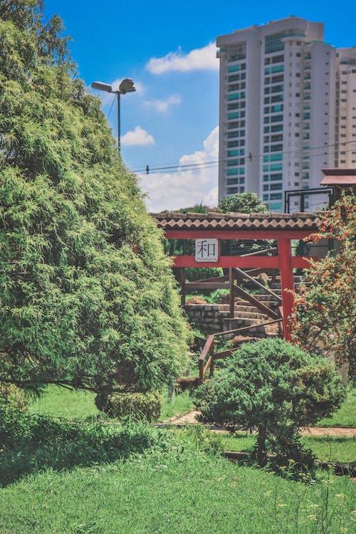 Ingyenes stockfotó boltív, Brazília, erdő témában