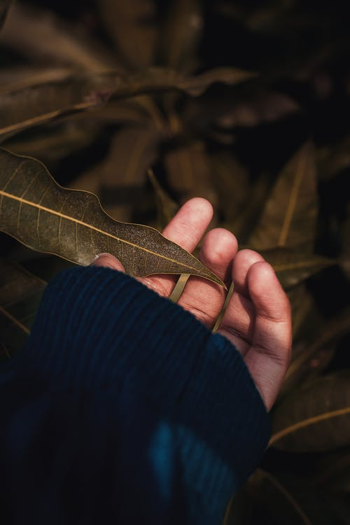 Person Holding Leafed Plant