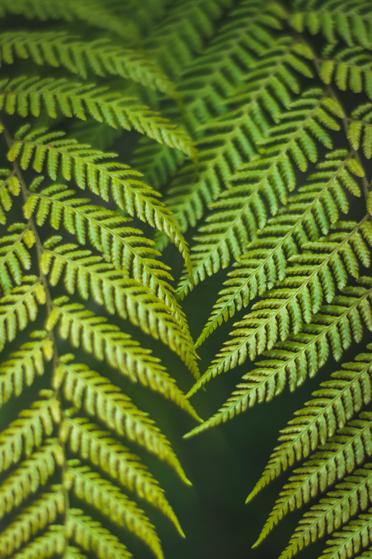 Foto stok gratis cabang, daun pakis, daun palem, di luar rumah