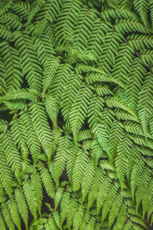 Безкоштовне стокове фото на тему «життя, зелені рослини, кімнатні рослини, краса в природі»