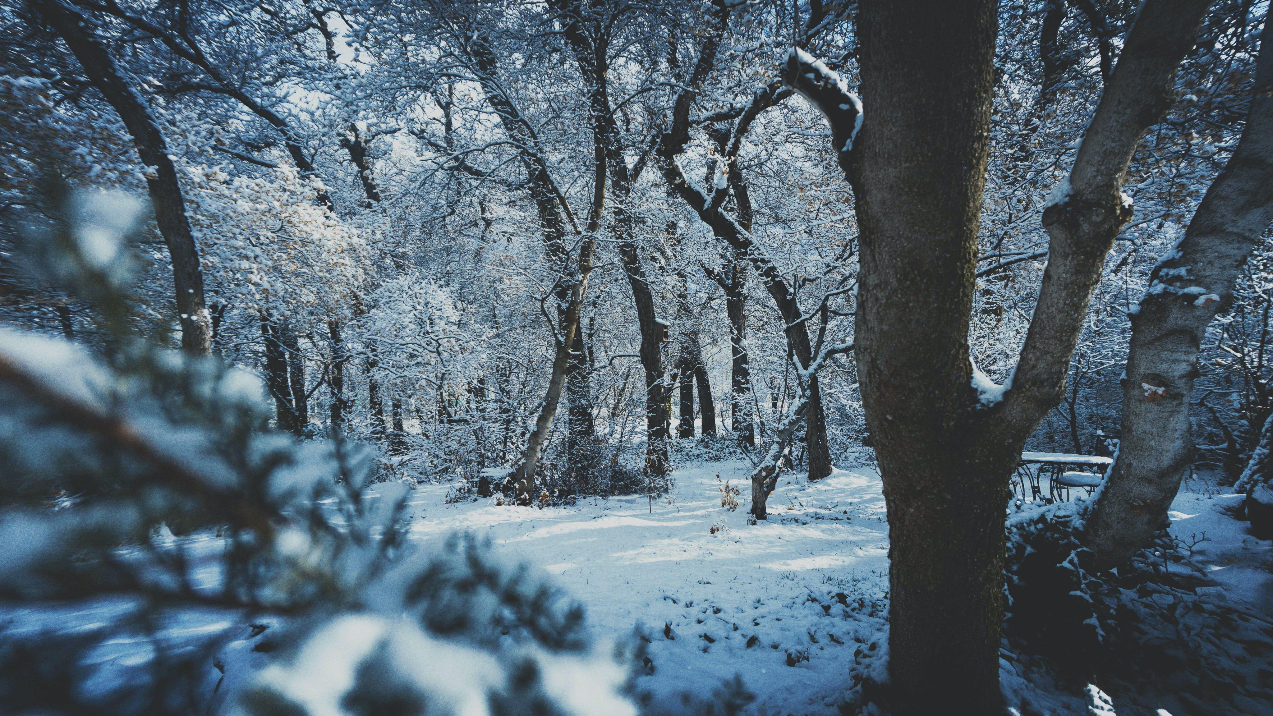 Foto stok gratis alam, cabang, cuaca, dingin