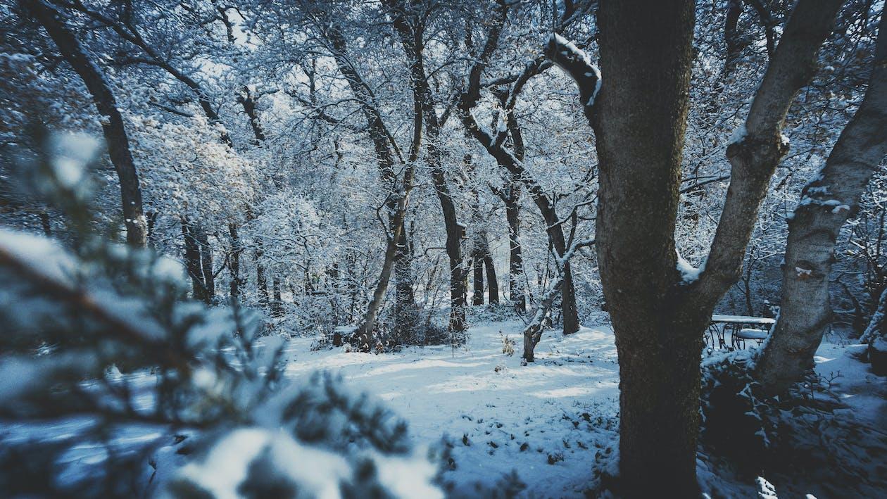 árvores, cênico, clima