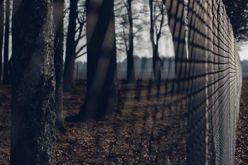 Fotobanka sbezplatnými fotkami na tému drôtený plot, ohrada, stromy