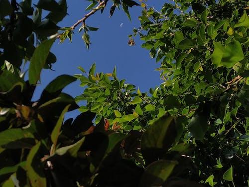 Ingyenes stockfotó ég, fa, fák, gyár témában