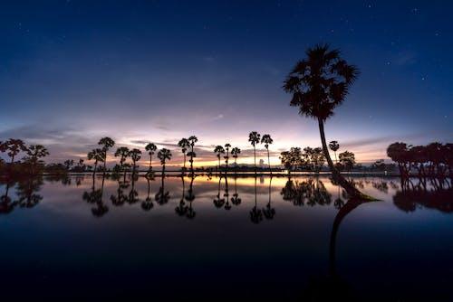 ağaçlar, akşam, arkadan aydınlatılmış, HD duvar kağıdı içeren Ücretsiz stok fotoğraf