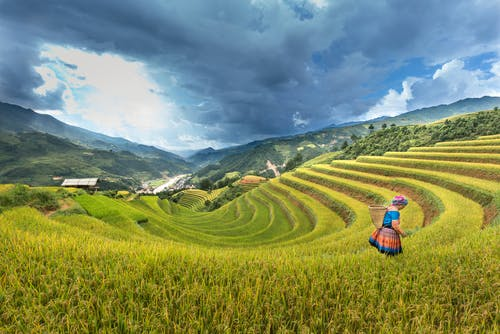 Woman Standing on Rice Field
