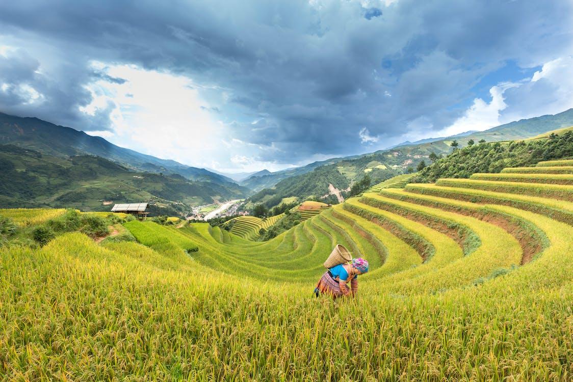 a l'aire lliure, agricultor, agricultura