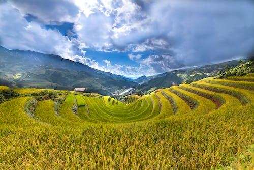 Foto stok gratis agrikultura, alam, awan, bangsa