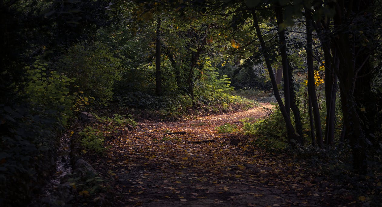 Лес в дневное время