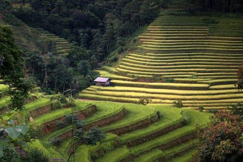Foto stok gratis agrikultura, bidang, di luar rumah, indah