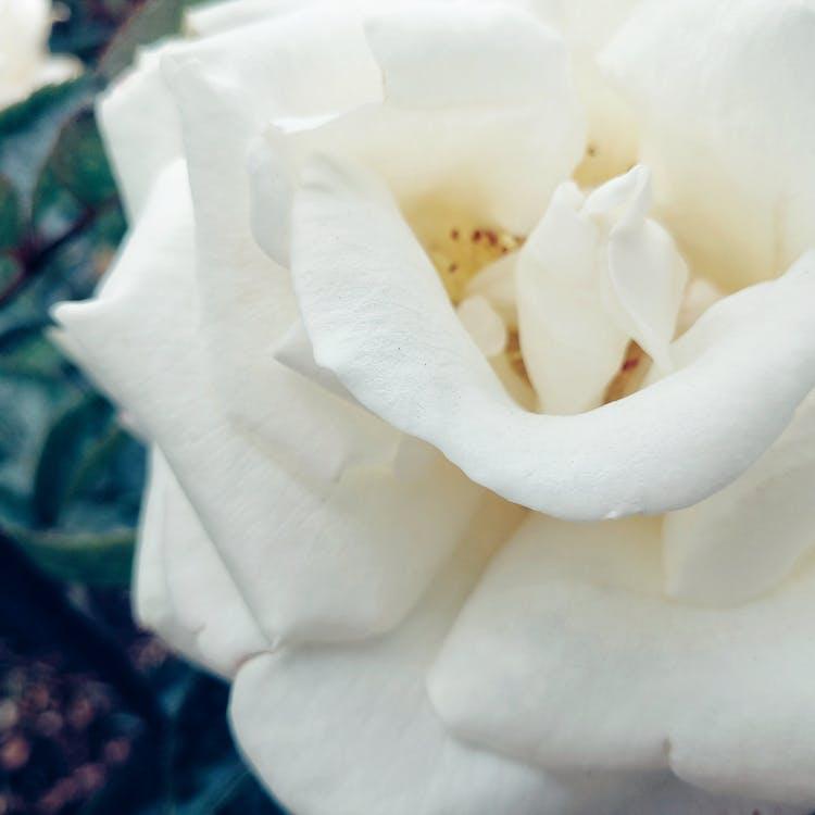 beautiful flowers, botanical garden, flower garden