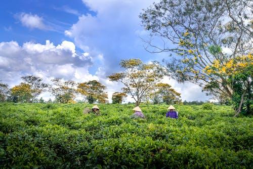 Fotos de stock gratuitas de agricultores, agricultura, al aire libre, arboles
