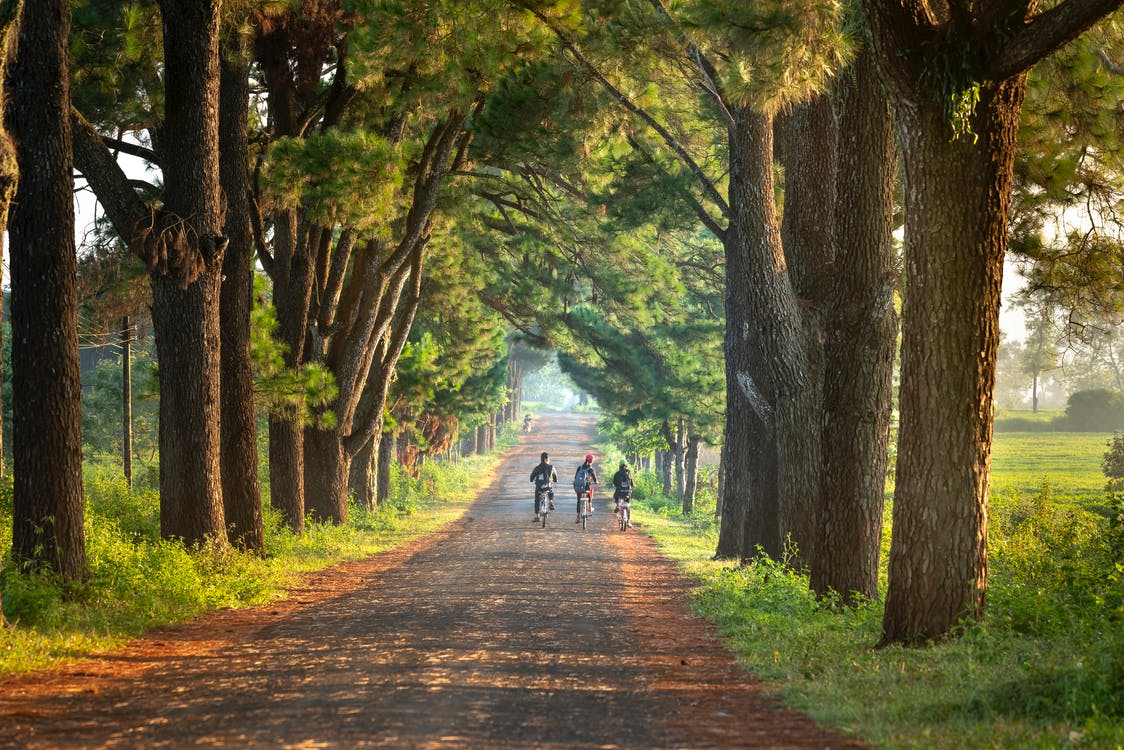 Three Children Riding Bicycles