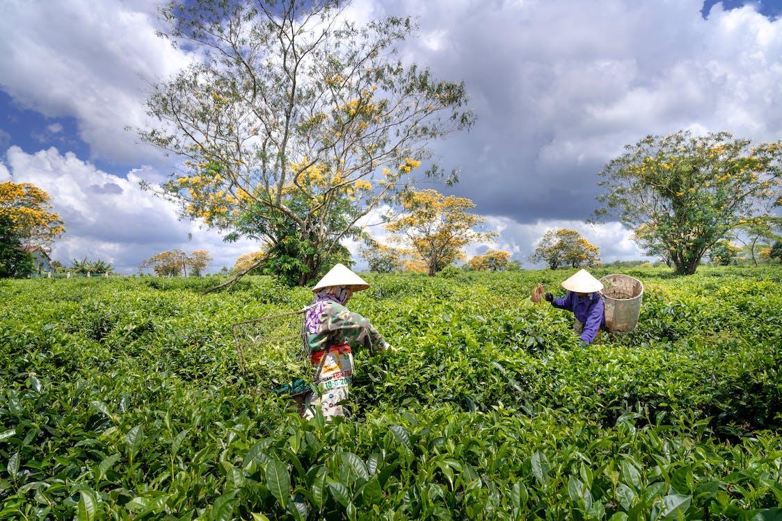 agricultură, câmp, cultură