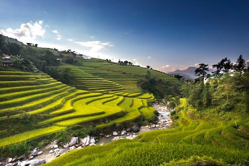 Photos gratuites de agriculture, campagne, clairière, colline
