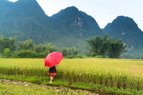 Foto profissional grátis de agricultura, ao ar livre, área, aumento