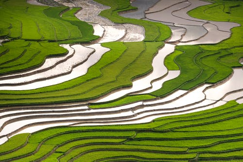 Aerial Photography of Green Rice Terraces