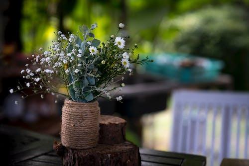 Kostnadsfri bild av blommor, blomning, blomsterarrangemang, dekoration