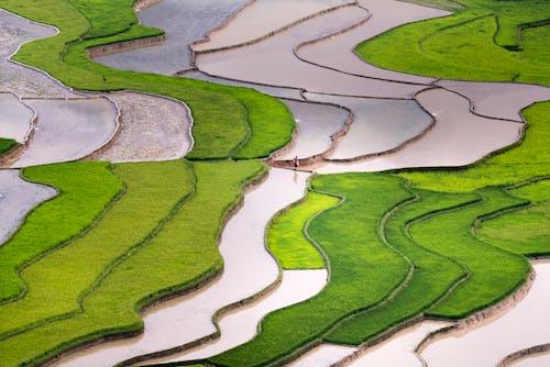 Foto stok gratis agrikultura, air, alam, bangsa