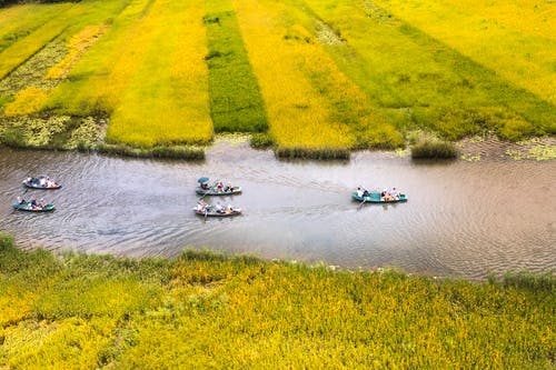Boats on River Between Rice Fields