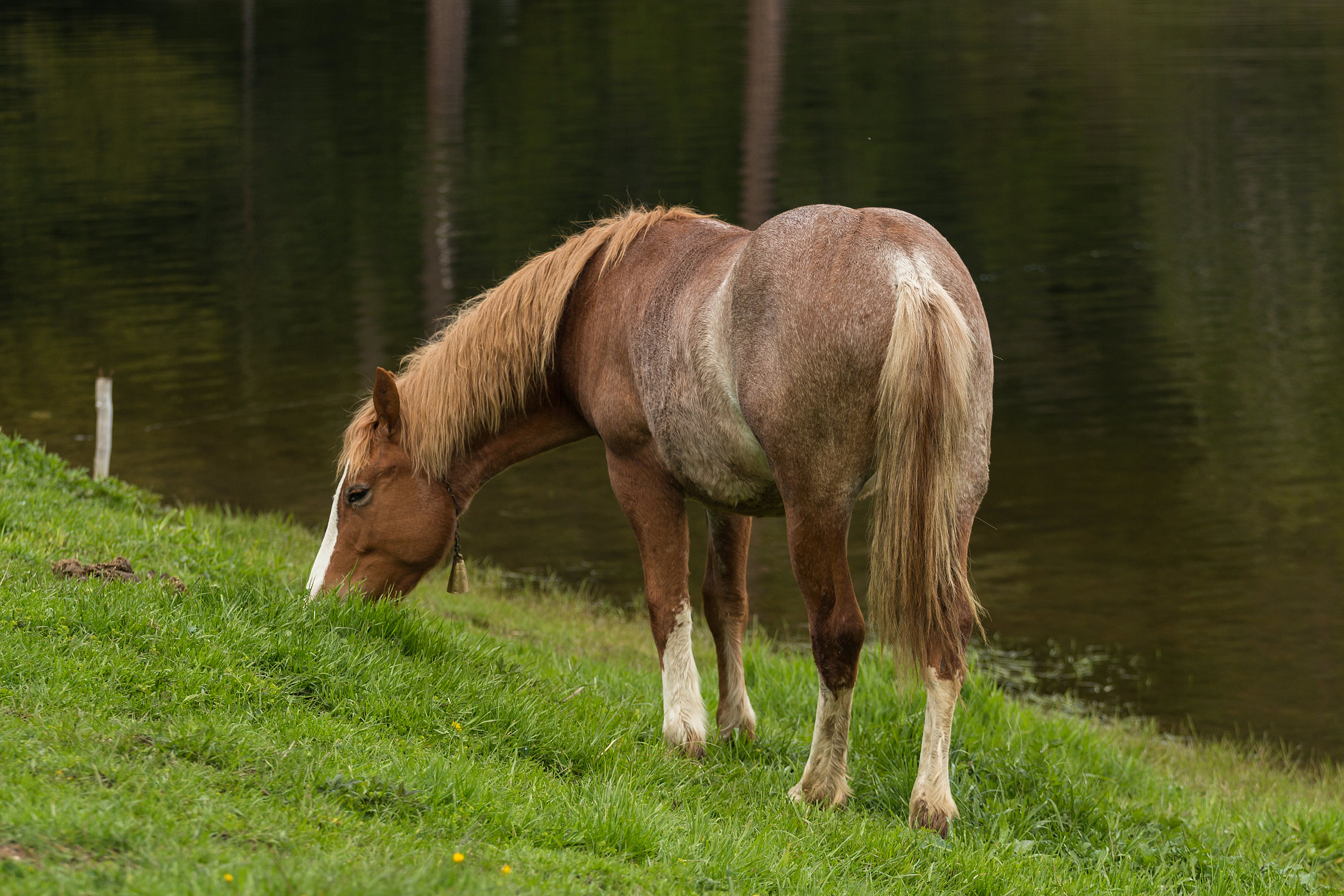 Brown and White Foot Horse