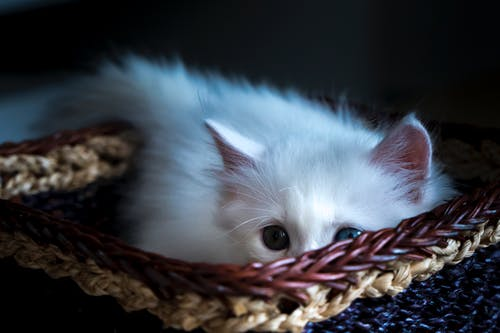 Close-up Photo of Cute White Kitten Lying in Basket