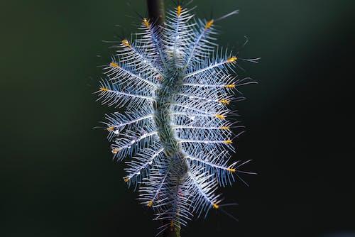 刺, 動物, 增長, 天性 的 免费素材照片