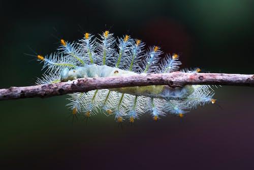 Fotobanka sbezplatnými fotkami na tému červ, chrobák, hmyz, húsenica
