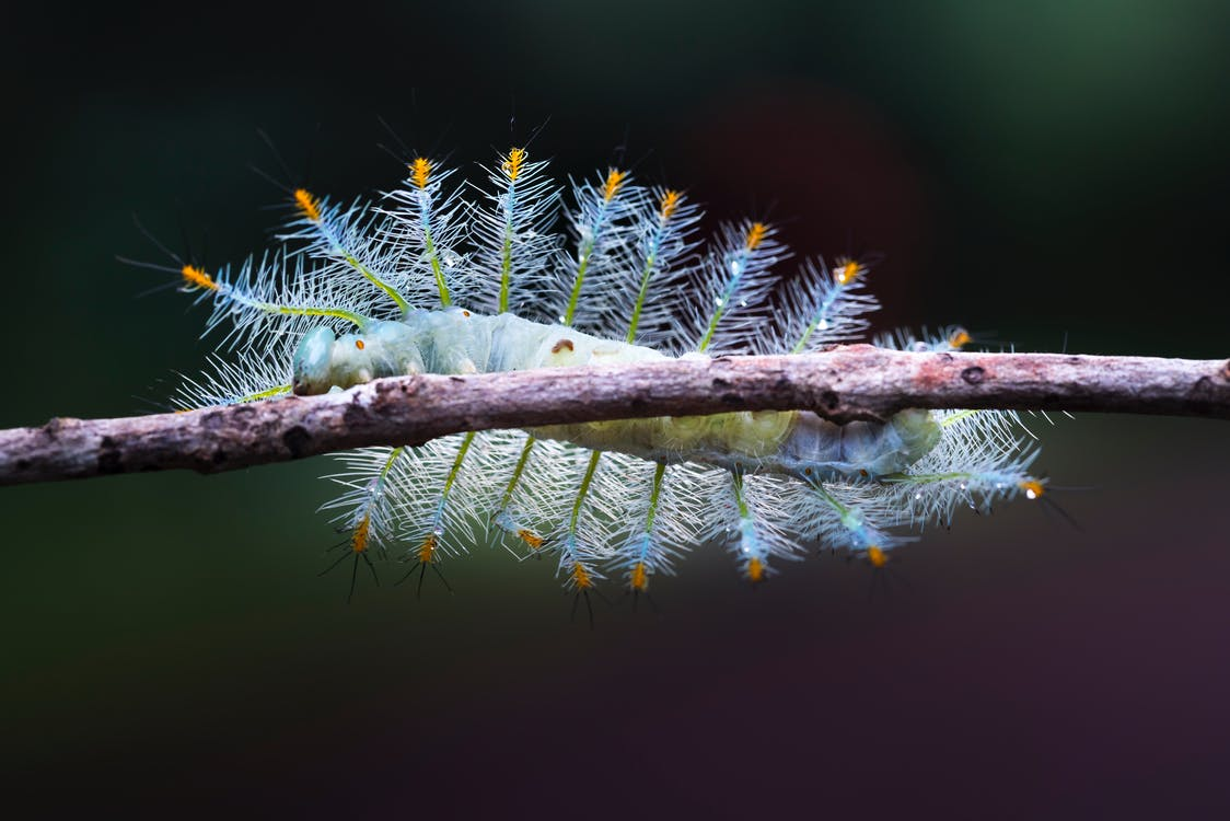 Caterpillar On Tree Branch
